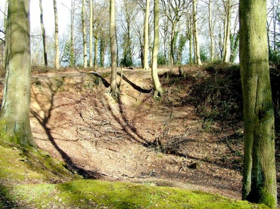 Dell - Chilterns Woodland -