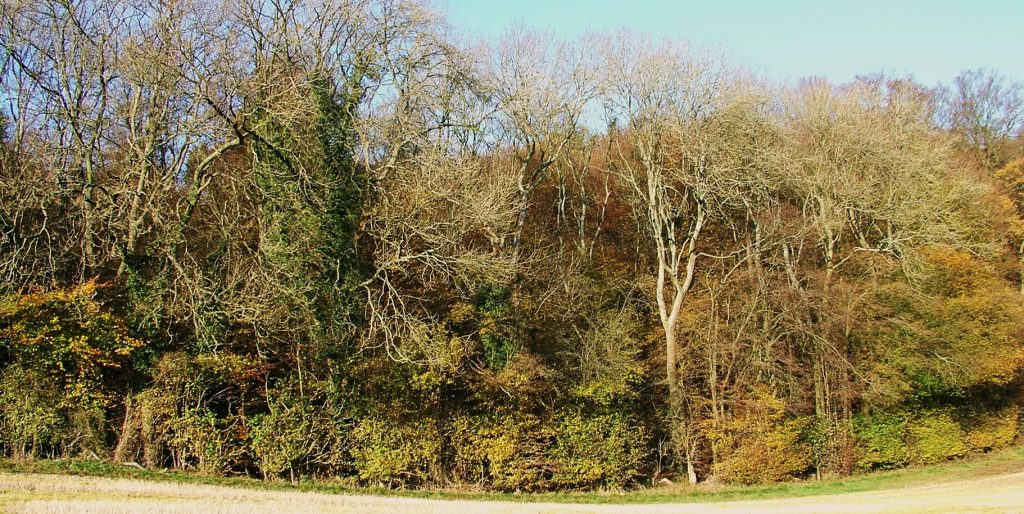 The Wildwood edge is defind by a medieval 'woodbank' and ditch