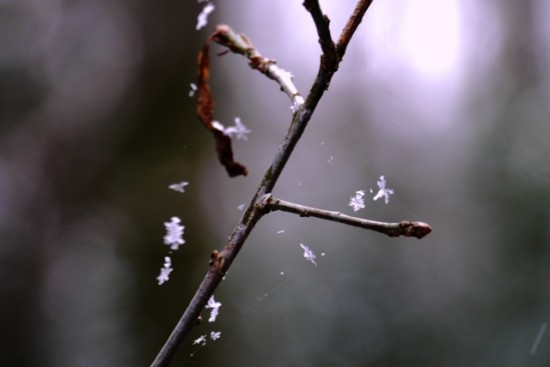 Wildwood snowflakes - Stuart King (2)